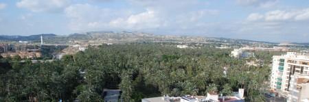 Ein sjelden palmeskog i byen Elche - Elx