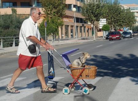 Hunden er menneskets beste venn. Det er sikkert!