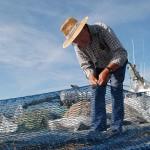 Fiskar bøter garn