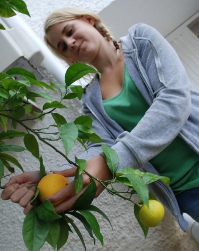 Kitty Karina plukker appelsiner i bakgården vår!
