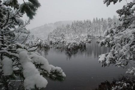 Tidleg snø
