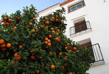 Men vinteren kjem og med fine solmogne appelsiner
